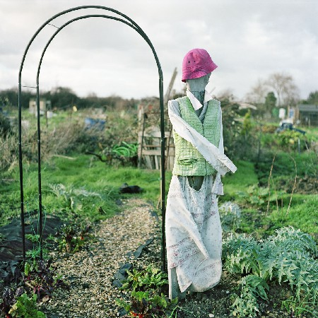 allotments 03