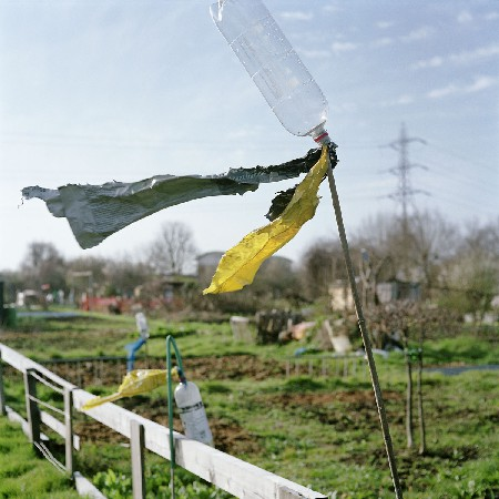 allotments 06